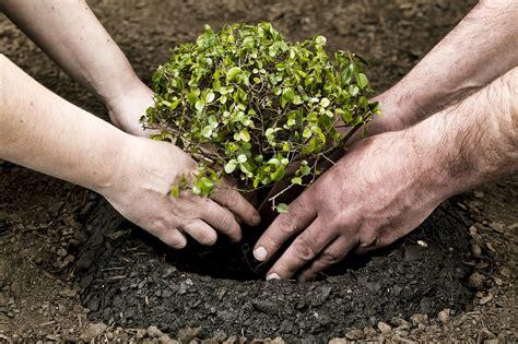 Ģimenes koku stādīšana