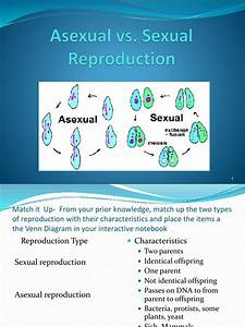Sexual And Asexual Reproduction Venn Diagram