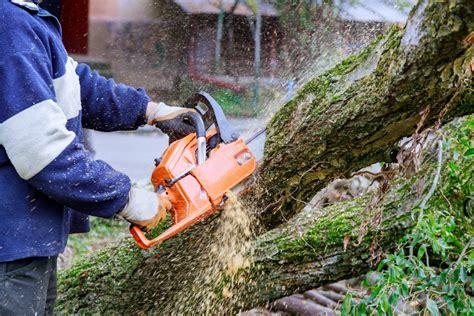 Kāda ir atbildība, ja nelikumīgi nozāģē koku - LV portāls