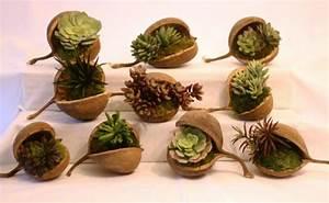 Sukkulenten Für Draußen : deko aus sukkulenten 80 tolle ideen f r drinnen drau en sukkulenten sukkulenten pflanzen ~ Watch28wear.com Haus und Dekorationen