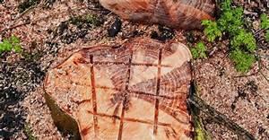 Baumstumpf Verrotten Beschleunigen : baumst mpfe entfernen so schaffen sie es selber einfach ~ Watch28wear.com Haus und Dekorationen
