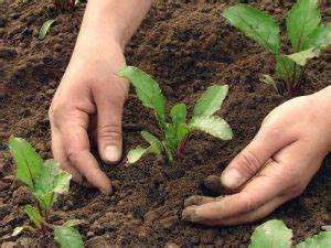 Terra Preta Kaufen : entstehung von terre preta schwarzerde terra preta das ~ A.2002-acura-tl-radio.info Haus und Dekorationen
