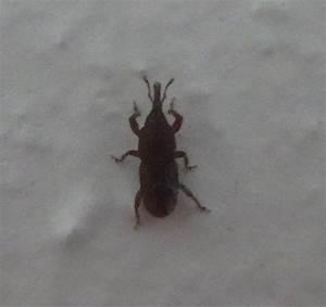 Können Kakerlaken Fliegen : welcher k fer ist das und wo finde ich das nest k che ~ Watch28wear.com Haus und Dekorationen