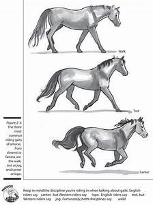 Horses  Riding  Breeding  U0026 More