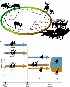 The Function Of Antlers And Wolf U2013adult Male Elk Encounters