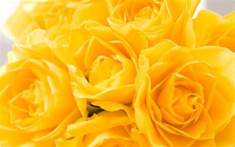 yellow wallpaper | HD Desktop Wallpapers | 4k HD