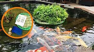 Schlammsauger Teich Selber Bauen : pflanzinsel f r teiche bauen so geht 39 s schwimmende ~ A.2002-acura-tl-radio.info Haus und Dekorationen