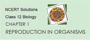 Ncert Solutions For Cbse Class 12 Biology  Chapter 1