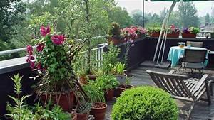Orchideen Oase Berlin : hausgarten die dachterrasse gr ne oase f r ~ A.2002-acura-tl-radio.info Haus und Dekorationen
