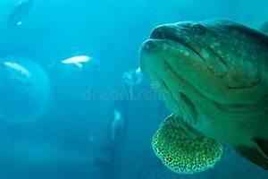 Fondo Subacqueo Del Paesaggio Di Grande Pesce Nell U0026 39 Oceano