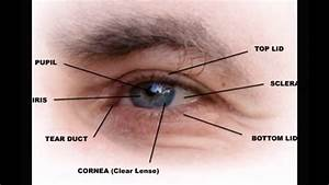 Outer Eye Parts