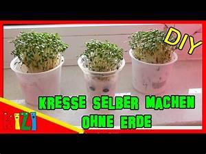 Joghurt Mit Früchten Selber Machen : kresse selber machen ohne erde diy ostergras samen ~ Watch28wear.com Haus und Dekorationen