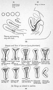 Erogenous Zones Chart Female Quot Control Of Conception Quot 1931 Excerpts At Mum