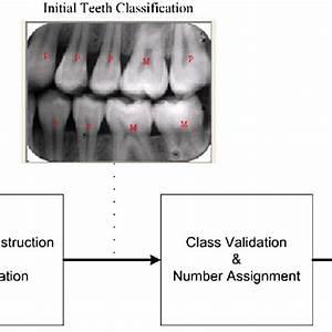 33 Labeled Teeth Diagram