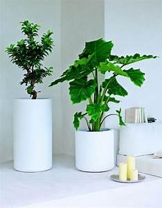 Zimmerpflanzen Für Schlafzimmer : sch ne zimmerpflanzen so dekorieren sie ihr zuhause mit ~ A.2002-acura-tl-radio.info Haus und Dekorationen