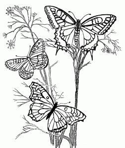 desenho de flor com borboleta Flores para colorir Adult