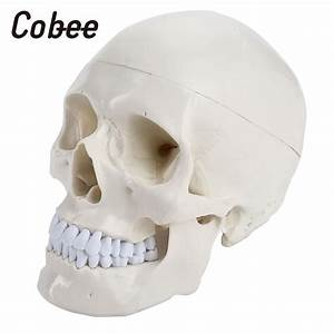 Aliexpress Com   Buy Medical Model Medical Head Model