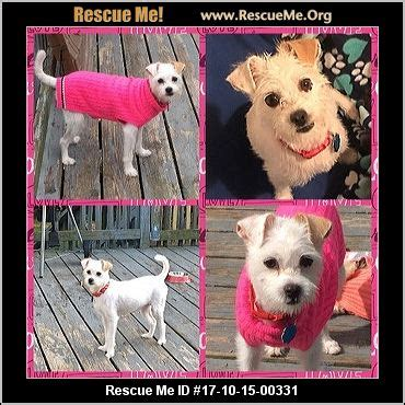 foto de Connecticut Mutt Rescue ― ADOPTIONS ― RescueMe Org