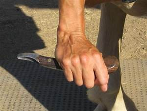 A Barefoot Hoof Trimmer U0026 39 S Guide To Tool Use