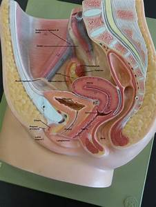 101 Best Images About Human Anatomy  U0026 Physiology On