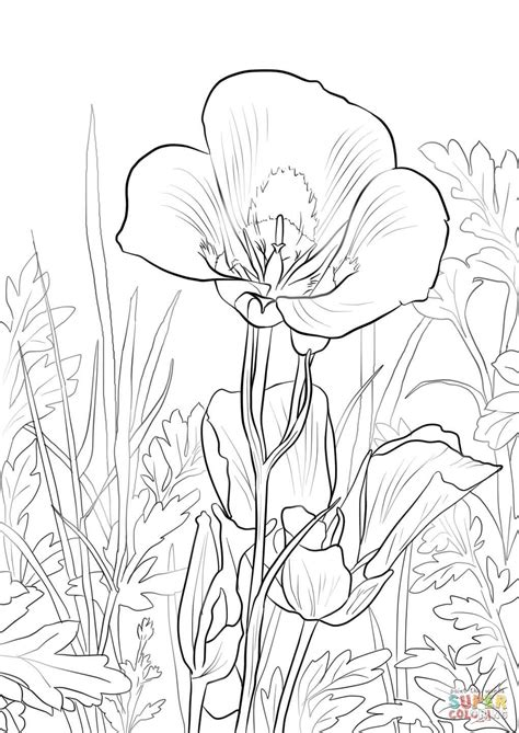sego lily coloring page(1020×1440) Flower coloring