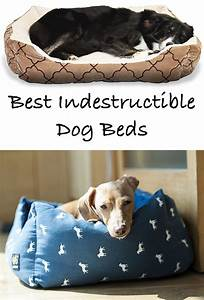 reviews of the best indestructible dog beds for extreme With best dog bed for diggers