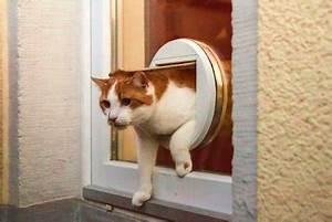 Katzenklappe Für Fenster : katzenklappe zugang f r vierbeiner und f r einbrecher ~ A.2002-acura-tl-radio.info Haus und Dekorationen