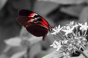 Schwarz Weiß Bilder Mit Rot : schwarz wei rot foto bild natur zoo tiere bilder ~ A.2002-acura-tl-radio.info Haus und Dekorationen