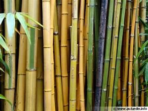 Bambou A Planter : bambou planter cultiver multiplier ~ Premium-room.com Idées de Décoration