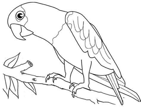 Macaw Parrot Bird Coloring Page See the category to find