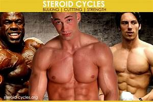 Steroid Cycles  Effects  U0026 Results For Bulking  U0026 Cutting   2019