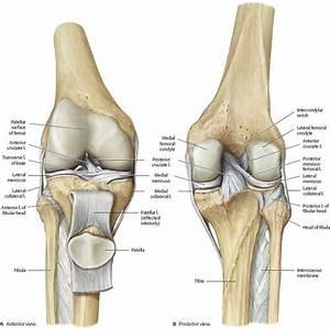 Pin By Judy Huntley On Anatomy