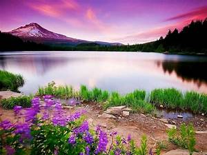 Full HD Size Nature Wallpapers Free Downloads Full HD High ...