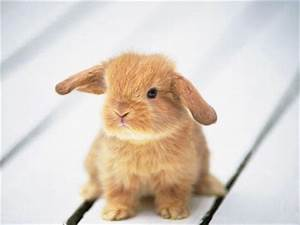 Video sex toy rabbitt