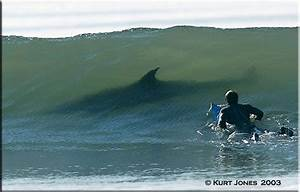 Shark In A Wave With Surfer