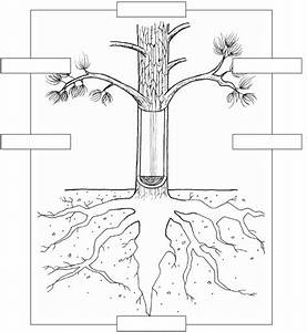 13 Best Images Of Part Of Tree Worksheet Printable