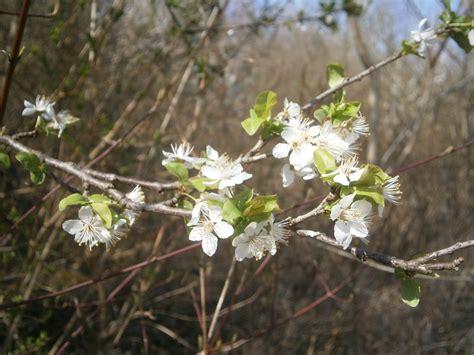 Krošnje u cvatu, pčele, leptir, Sava kod Podsusedskom ...