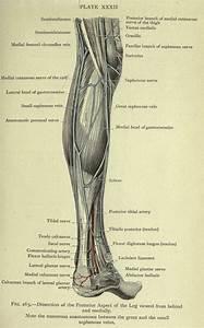 466 Best Vintage Anatomy Images On Pinterest