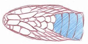 Snake Scales Drawing At Getdrawings