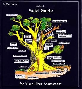 Iml Usa  U203a Updated Field Guide For Vta