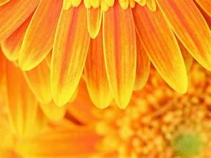 Wirkung Der Farbe Grün : orange wirkung bedeutung und wirkung der frabe orange viversum die orange farbe bedeutung ~ Markanthonyermac.com Haus und Dekorationen