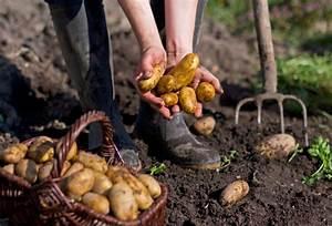 Kartoffeln Für Hunde : kartoffeln f r hunde giftig oder gesund ~ A.2002-acura-tl-radio.info Haus und Dekorationen
