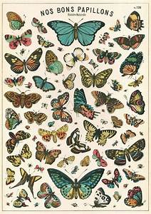 Repro Postcard  French Butterfly Chart