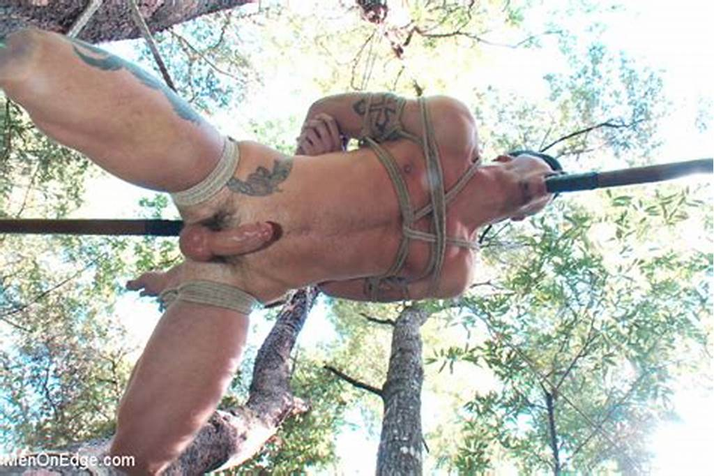 #Naked #Tree #Tied #In #Woods