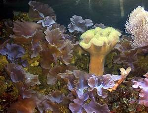 Environment  Coastal Ecosystems On The Brink  Second Of