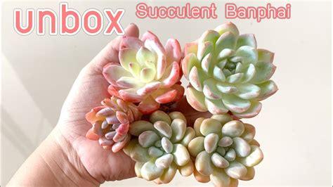[ RookieP ] EP21 Unbox : ร้าน Succulent Banphai - YouTube