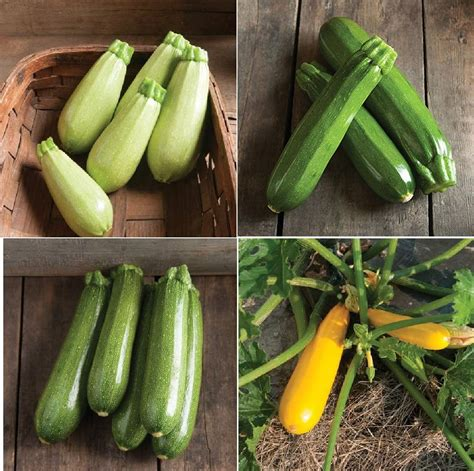Buy Collection Seed Set Zucchini