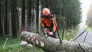 Baum Fällen Technik : baumf llen mit einem holzf ller profi youtube ~ A.2002-acura-tl-radio.info Haus und Dekorationen