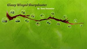 Glassy Winged Sharpshooter By Zoey Dunmire On Prezi
