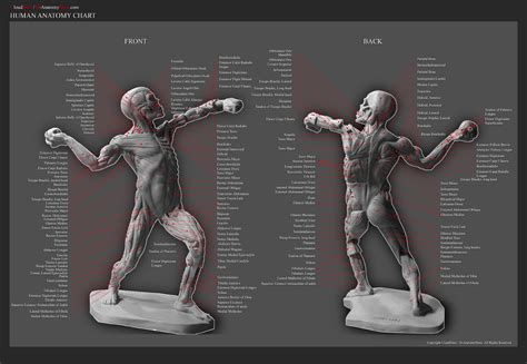 Female pelvic diagram anatomy femal. $47.97 DVD-Sculpting The Ecorche Male Figure